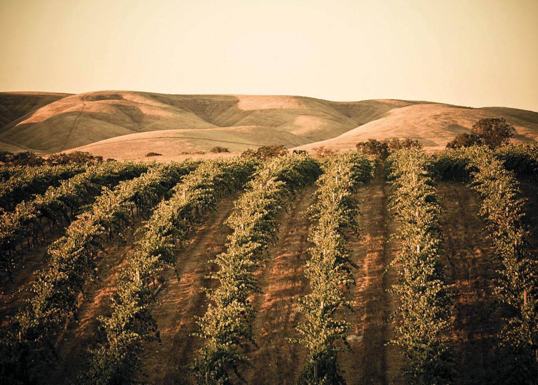 Esencja win słonecznej Kalifornii