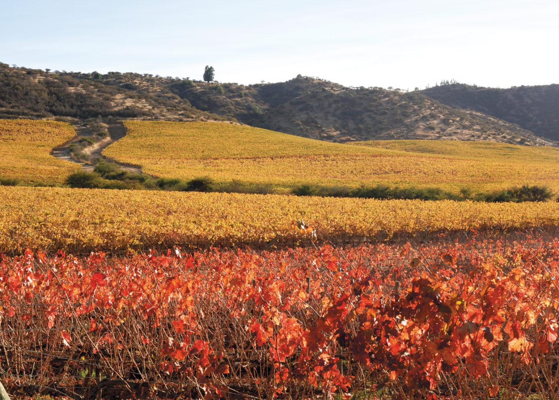 Miks włoskiej tradycji z chilijskim temperamentem