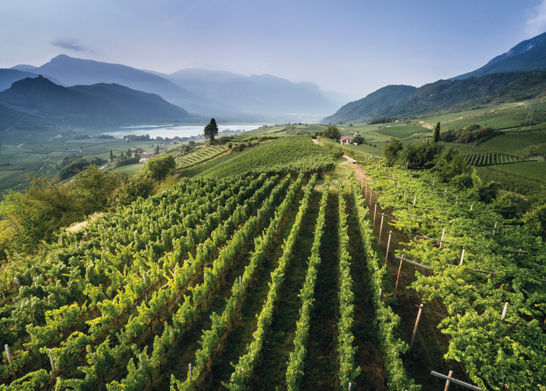Winiarska duma Alto Adige
